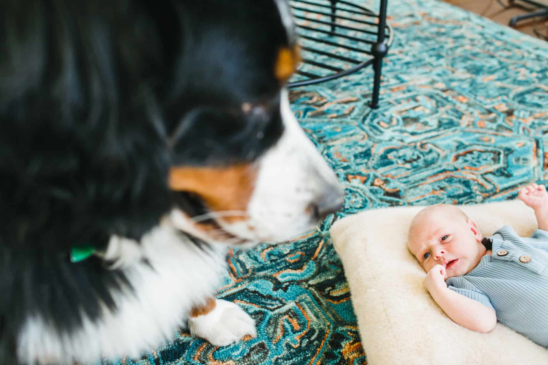 Philadelphia Newborn baby photographer
