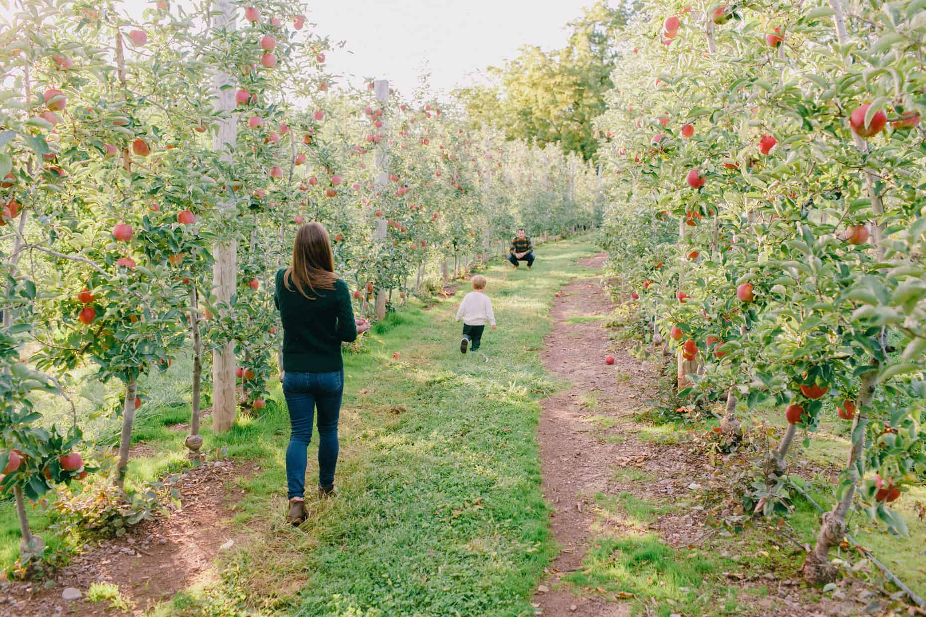 Apple Picking Family Photographer